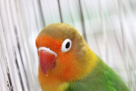 vivo: parrot in cage, closeup of photo in a zoo
