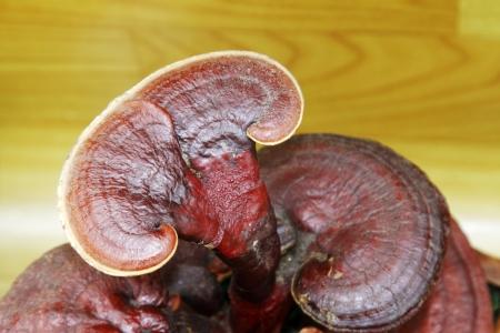 closeup of ganoderma lucidum, a kind of herbs, in a flower market 스톡 콘텐츠