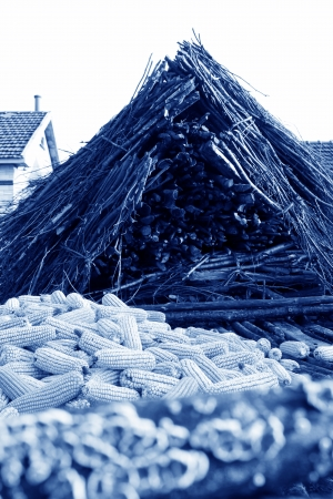 drying corn cobs: Corn and woodpile in rural areas, north china