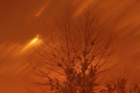 arboles secos: �rboles muertos en la noche, primer plano de la foto