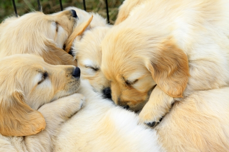 A few dogs slept together, closeup of photo