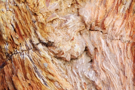 restore ancient ways: tree fossil natural grain, closeup of photo
