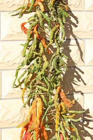 bunchy: bunchy pimientos verdes secos, primer plano de la foto