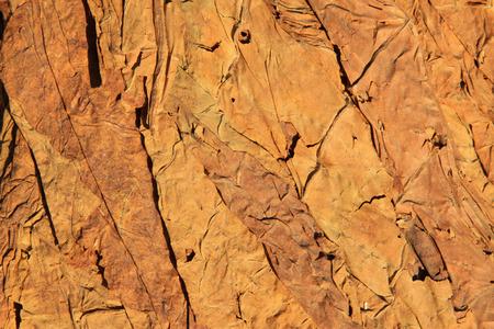 黄色の乾燥タバコ葉、写真のクローズ アップ