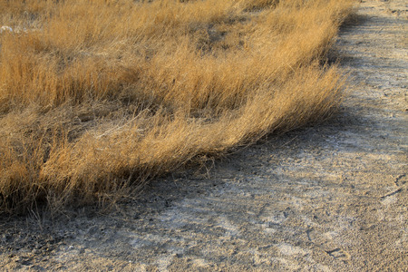 dry grass in the wild