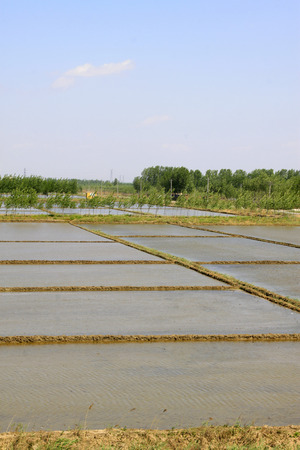 paddy field: paddy field rural areas in China