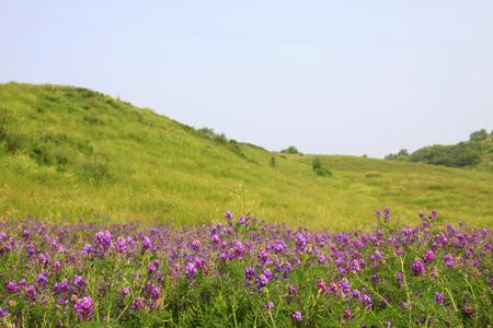 TULIGEN GRASSLAND - JULY 20: natural scenery in the Tuligen River on July 20, 2014, Xilin gol league, Inner Mongolia autonomous region, China.  Standard-Bild