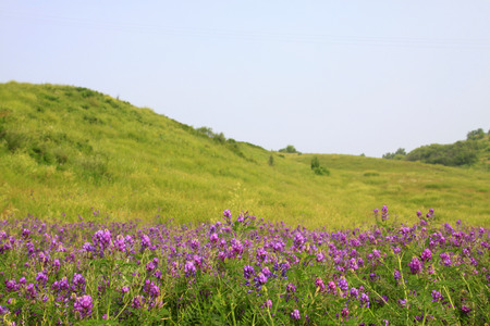 TULIGEN GRASSLAND - JULY 20: natural scenery in the Tuligen River on July 20, 2014, Xilin gol league, Inner Mongolia autonomous region, China.  스톡 콘텐츠