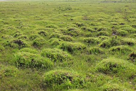 wider: Grassland natural scenery, closeup of photo Stock Photo