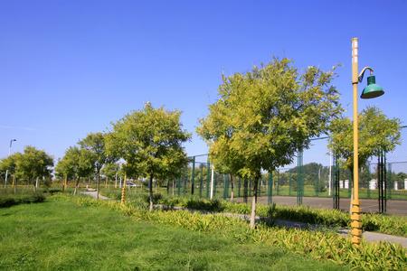 greening: greening plants and street lamp, closeup of photo