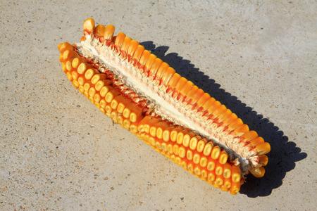aureate: Golden corn, closeup of photo