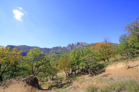 deciduous woodland: mountain natural scenery, closeup photo