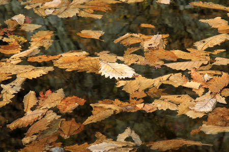 garden features: Color leaves on water surface, closeup of photo Stock Photo