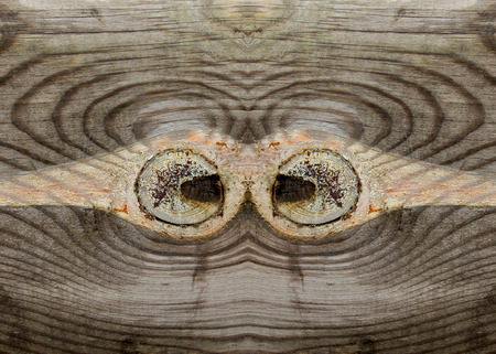 abstract aperture: Wood texture, closeup of photo