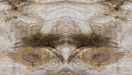 erosion: Wood texture, closeup of photo