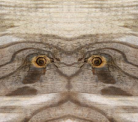 damp: Wood texture, closeup of photo