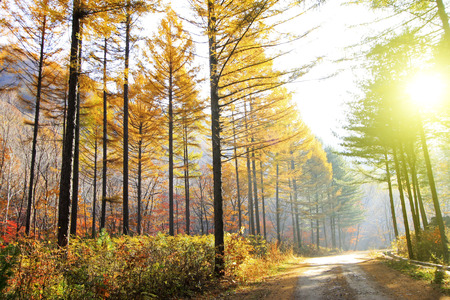 irradiation: Forest road in the autumn, closeup of photo