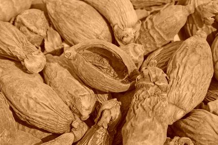 betel: dry betel nut  Stock Photo