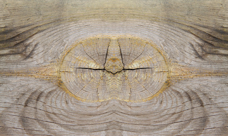 damp: Wood texture, closeup of photo