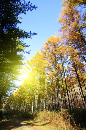 irradiation: Forest road in the autumn