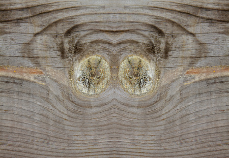 scarred: Wood texture, closeup of photo