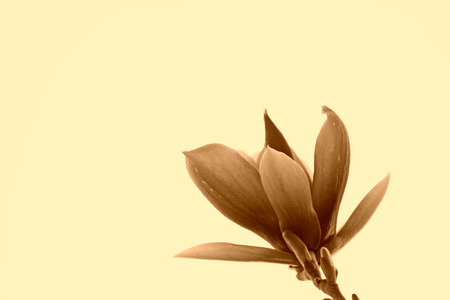 garden features: closeup of magnolia flower in the sky Stock Photo