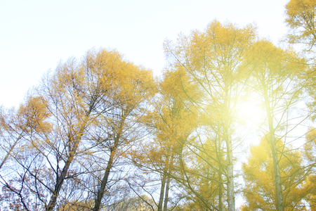 irradiation: Pine branches in the sky, closeup of photo Stock Photo