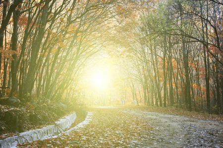 irradiation: Deciduous trees and roads, closeup of photo Stock Photo