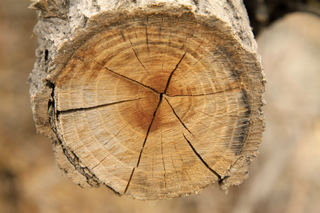 scarring: timber cross section texture, closeup of photo