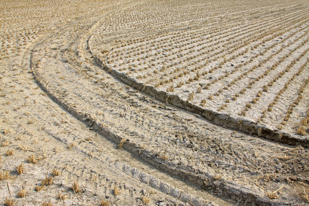 rut: Rice paddies and rut, closeup of photo