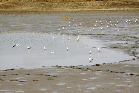 water birds: water birds foraging in the pond, closeup of photo