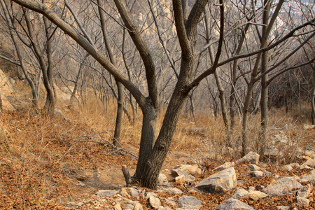 none: dead trees in the mountains, closeup of photo Stock Photo