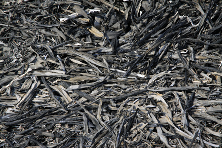 ash: plant ash, closeup of photo