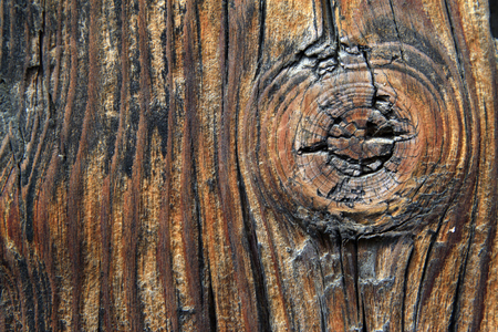 scarring: Woodiness grain, closeup of photo Stock Photo