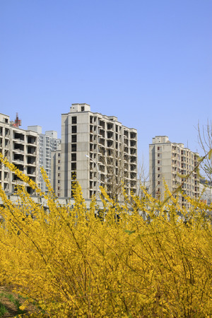 unfinished: Unfinished buildings and forsythia flowers blooming, closeup of photo
