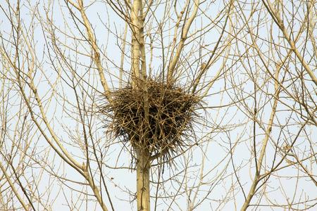 nido de pajaros: nido de p�jaro en el �rbol, primer plano de la foto