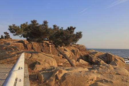 travel features: pine trees and rock scene in the park, closeup of photo