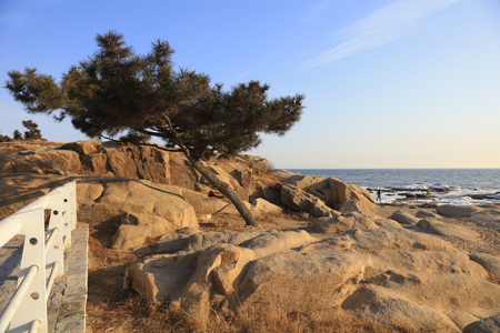 travel features: pine trees and rock scene in the park Stock Photo