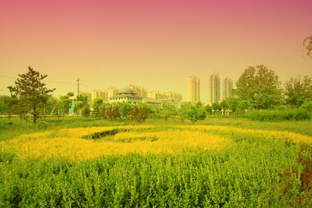 greening: Greening plants in a park