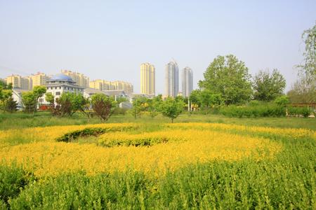 greening: Greening plants in a park, closeup of photo