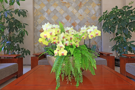 ferns and orchids: Butterfly orchid and kidney fern on the tea table, closeup of photo