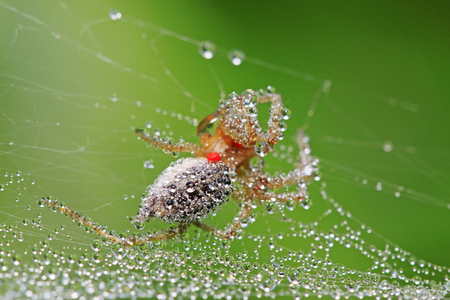 arachnids: water droplets on spider web in the wild