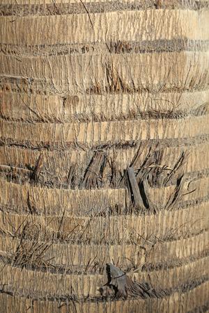 bark peeling from tree: Coconut tree bark