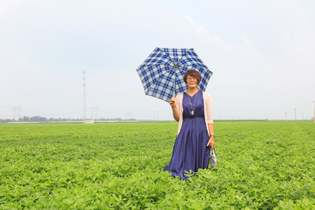 hebei: Luannan - August 2: a lady visiting in the peanut field, on August 2, 2016, luannan county, hebei province, China