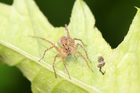 spider on plant in the wild Stock Photo