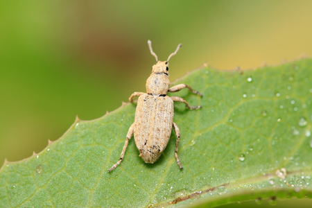 vigilance: weevil on plant in the wild