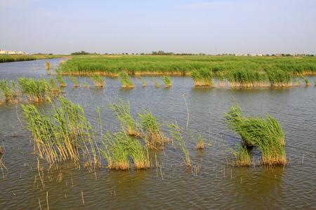 wetland: Wetland park natural scenery Stock Photo
