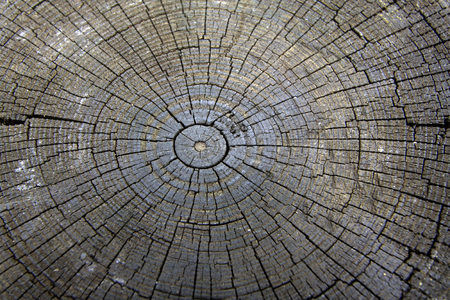 cross section: Wooden cross section Stock Photo