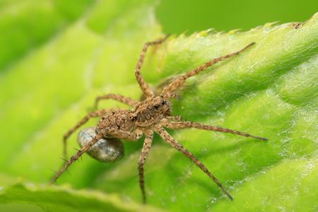 arachnids: spider on plant in the wild Stock Photo