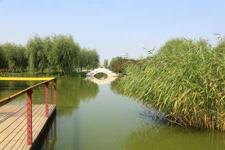 canne: Reeds and rail in a park